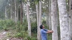 Khi nhân dân đồng lòng bảo vệ rừng