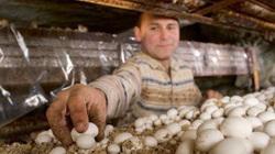"""Angel Moioli - người nông dân """"sống về đêm"""" chuyên trồng nấm dưới lòng đất"""