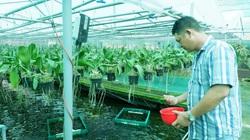 Long An: Làm nông nghiệp công nghệ cao, trên trồng phong lan rừng, dưới nuôi cá bơi tung tăng, chàng Hoàng Hậu kiếm bộn tiền