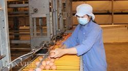 """Anh hùng lao động Ba Huân: Chỉ xuất khẩu, """"con xóa đói giảm nghèo"""" mới cứu được nông dân"""