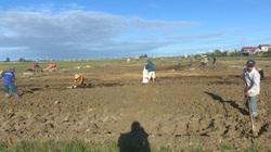 Tung 2.340 tấn giống lúa, 500 tấn giống ngô, 40 tấn hạt giống rau hỗ trợ dân miền Trung sản xuất vụ Tết