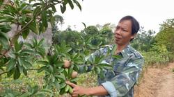 Bán cây giống gì mà một ông nông dân tỉnh Thái Bình lãi gần 1 tỷ đồng mỗi năm, thoát cảnh sạt nghiệp?