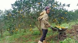 'Hai đứa ngây' làm nông nghiệp theo hướng hữu cơ