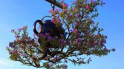 Chuyện lạ Quảng Nam: Dị nhân có hàng trăm cây bonsai mọc ngược được xác nhận kỷ lục Việt Nam
