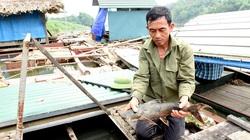 """Tuyên Quang: Nuôi nhốt những con cá đặc sản râu dài trước ví như """"loài thủy quái"""" tinh ranh, dân trở nên giàu có"""