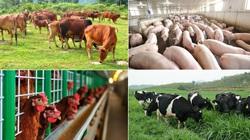 Chuyển mình từ năng lượng sang chăn nuôi, Tập đoàn Xuân Thiện khởi công dự án 36.000 tỷ đồng