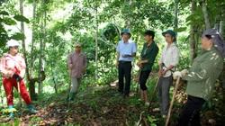 Rừng Lai Châu thêm xanh từ một chính sách