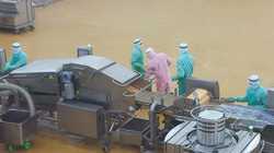 """Bình Phước: Sẽ trở thành """"thủ phủ"""" xuất khẩu gà lớn nhất Việt Nam"""