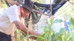 Đồng Nai: Lão nông thành công với mô hình vườn ao chuồng (VAC)