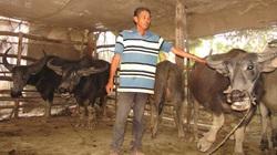 Long An: Nông dân nuôi trâu đen cả đồng, đếm không xuể, nhà nào cũng có của ăn của để, cả làng làm giàu