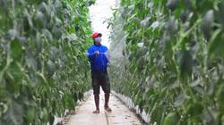 Hơn 15 năm phát triển NNCNC ở Lâm Đồng Bài 3: Nông nghiệp hữu cơ sẽ là hướng đi mới