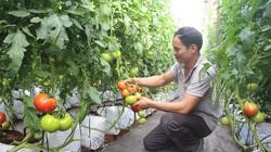 Đức Trọng: Nhiều hộ dân tộc thiểu số thoát nghèo nhờ nông nghiệp công nghệ cao