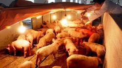 Clip hướng dẫn bà con biện pháp chống rét cho đàn gia súc gia cầm