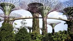 Khu vườn nhân tạo đẹp lộng lẫy tựa thiên đường ở Singapore