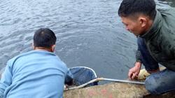 Lào Cai: Đến khổ, nuôi cá hồi bán chật vật, mang tiếng cá quý tộc mà giá bán rẻ hơn cả cá trắm đen