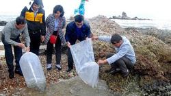 Bình Định: Vì mục đích này, hàng chục ngàn con cá rô, trắm cỏ, cá chẽm được thả xuống 2 cái đầm lớn nhất tỉnh