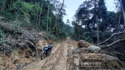 Khởi tố vụ mở hơn 2,4km đường vào phá rừng tự nhiên ở Bắc Kạn
