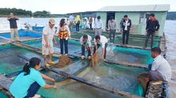 Kon Tum: Thả cá lồng bè trên hồ thuỷ điện, mấy tháng đã có cá to bán, mỗi lồng lãi 30 triệu