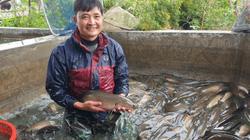 Nam Định: Nuôi cá lóc dày đặc, tung thức ăn cá nhảy như làm xiếc, kéo mẻ lưới bắt được hàng tấn, xem đã mắt