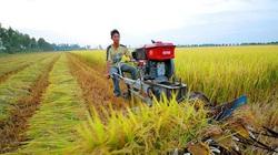 6 vấn đề cực quan trọng liên quan đến sang tên sổ đỏ đất nông nghiệp