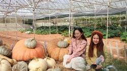 Vì sao tỉnh Lâm Đồng phải xây dựng bộ tiêu chí mới về du lịch canh nông?