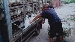 Giá gia cầm hôm nay 27/12: Cập nhật giá gà, vịt mới nhất