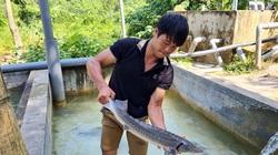 """Nguy cơ """"vỡ trận"""" cá tầm Việt: Đến lượt Hội Cá nước lạnh Lào Cai kêu cứu"""