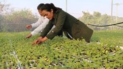 Người giúp dân làng Pơ Nang làm trà dược liệu công nghệ cao
