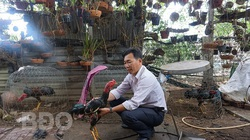 Làm giàu khác người: Không ít nông dân tỉnh Bình Định lãi 20 triệu/tháng nhờ ham đá gà từ nhỏ