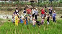 """Trang trại, HTX du lịch nông nghiệp ở Hà Nội """"ăn nên làm ra"""""""