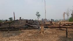 Thu hồi hàng nghìn m2 đất được cấp sổ đỏ trên đất rừng