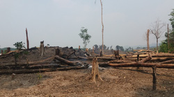 """Để mất hơn 550 ha rừng, """"dàn"""" lãnh đạo, cựu lãnh đạo Ban quản lý bị kỷ luật"""
