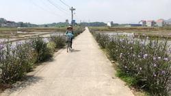 Đại Từ - Thái Nguyên: Đầu tư hơn 15 tỷ đồng xây dựng hạ tầng khu sản xuất nông nghiệp tập trung