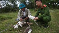 Video điều tra: Chim hoang dã được giải cứu như thế nào?
