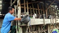 Tiền Giang: Nuôi dê vùng ven biển, nông dân chăm nhàn thu lời cao, có nhà bỏ ra 1 tỷ nuôi đàn dê 200 con