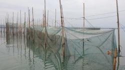 Quảng Ninh: Buông lỏng quản lý, biển Hải Hà tiếp tục bị hủy diệt