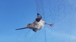 Công ty tư nhân xin tự bỏ kinh phí giải cứu chim trời, nhưng chưa nhận được hồi đáp!