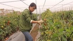 Hà Nội: Gỡ rối cho hợp tác xã, kinh tế tập thể trong giai đoạn mới