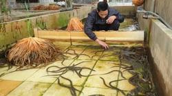 Nuôi lươn không bùn to bự dày đặc trong bể xi măng, nông dân 8X tỉnh Thái Bình bán 10 tấn lươn, thu tiền tỷ