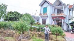 """Thái Bình: Chàng kỹ sư xây dựng bỏ việc ở Hà Nội về quê trồng cây báo Tết, ở """"biệt phủ"""" đẹp long lanh"""