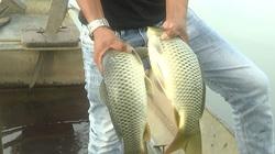 Bình Thuận: Nuôi thành công thứ cá chép giòn ăn sần sật, giá bán gấp 3 lần cá chép thường