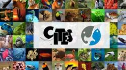 Giảm một nửa thời gian xử lý hồ sơ, CITES Việt Nam giúp doanh nghiệp tiết kiệm chi phí