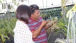 Hé lộ chuyện ông nông dân tỉnh Tiền Giang mua 1 khúc lan giả hạc đột biến 5 cánh trắng Tiểu Vy giá 600 triệu