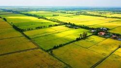 Năm 2021, mua đất nông nghiệp bằng giấy viết tay có được cấp sổ đỏ?