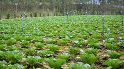 Người nước ngoài có được mua đất nông nghiệp tại Việt Nam?