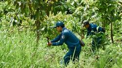 Trồng 1 tỷ cây xanh: Bộ NNPTNT sẽ ưu tiên cho những loại cây nào?