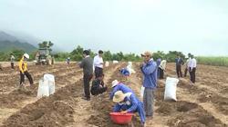 Khánh Hòa: Liên kết với nông dân để phát triển vùng mía nguyên liệu
