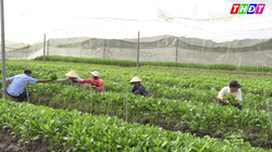 Đồng Tháp: Mô hình sản xuất rau hữu cơ trong nhà lưới