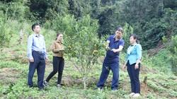 Clip: HTX Nông nghiệp Nậm Ban thu tiền tỷ nhờ trồng cây ăn quả theo hướng VietGAP