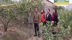 Hà Nam: Hiệu quả mô hình tổ hội nông dân nghề nghiệp sản xuất sản phẩm an toàn